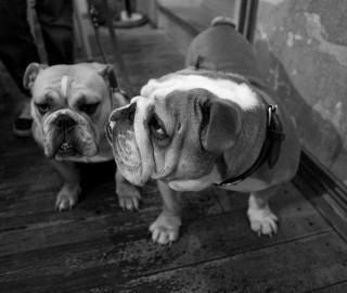 Gertrude & Edgar